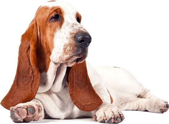 Kennel Cough Spread