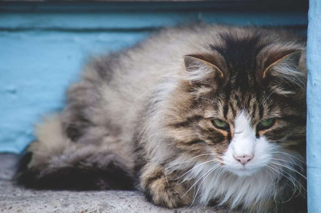 Cat With Kennel Cough