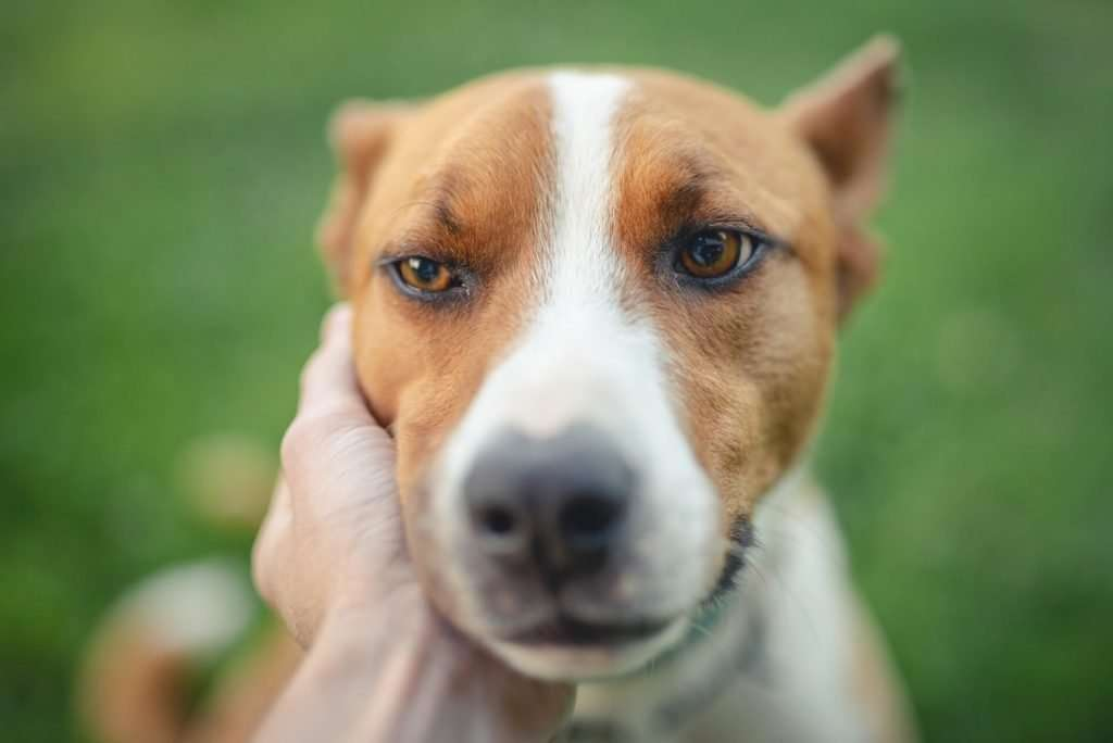 Deep Cough in Dogs