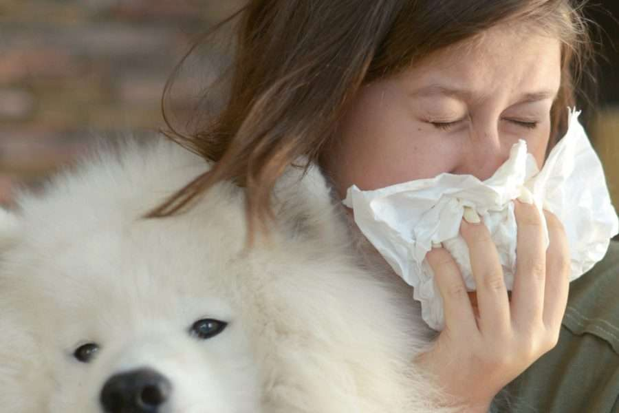 Is Kennel Cough Contagious to Humans