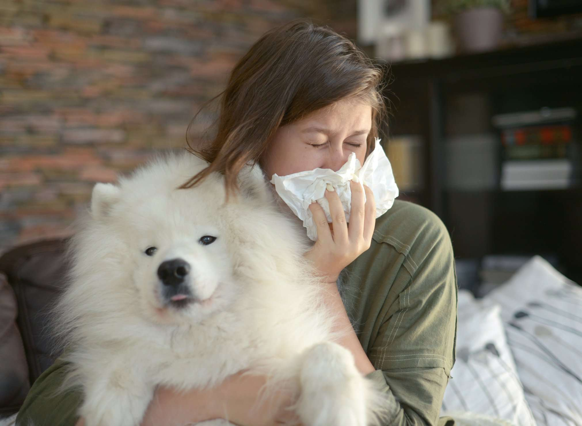 Is Kennel Cough Contagious to Humans?