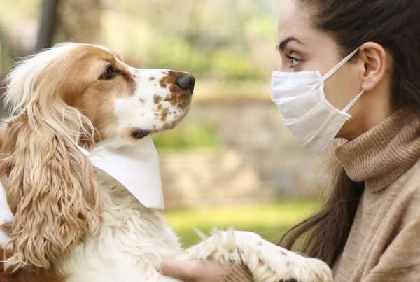 Can Humans Get Kennel Cough
