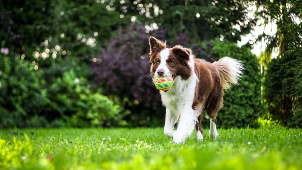 Does Kennel Cough Need to be Treated?