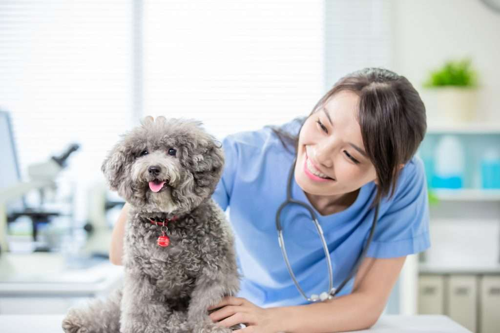 How is Bordetella Vaccine Administered?