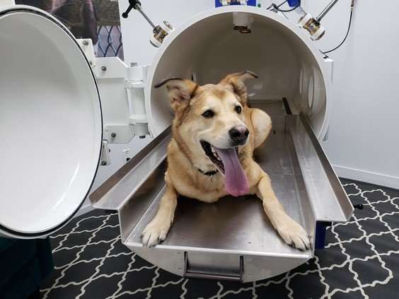 Oxygen Therapy for Dogs