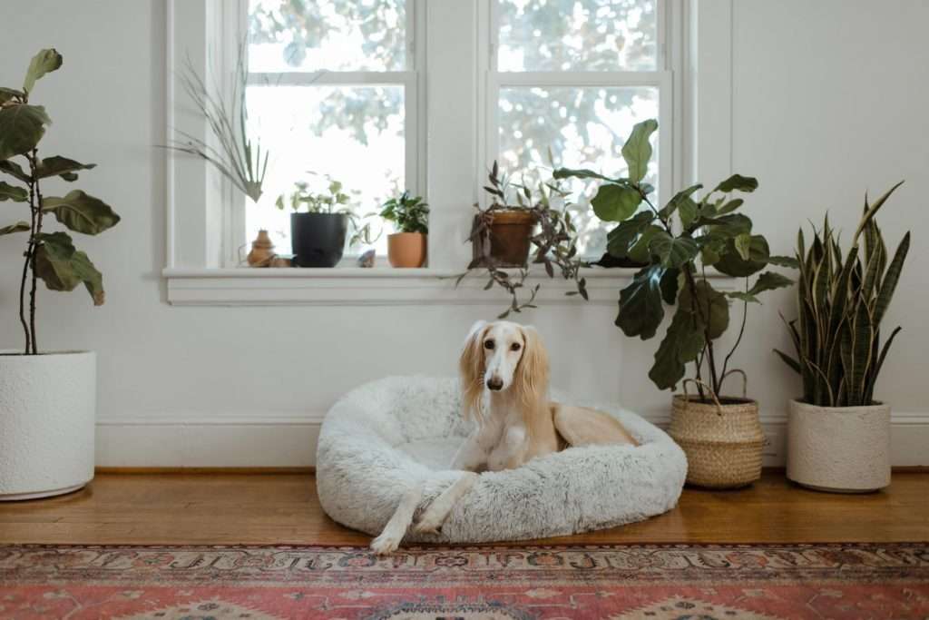 Cure kennel cough at home