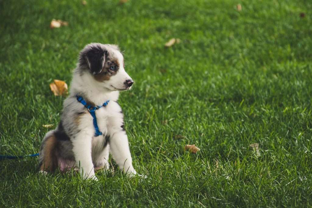 Where does puppy catch kennel cough