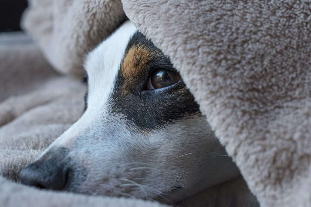 Kennel Cough vs Heart Cough in Dogs