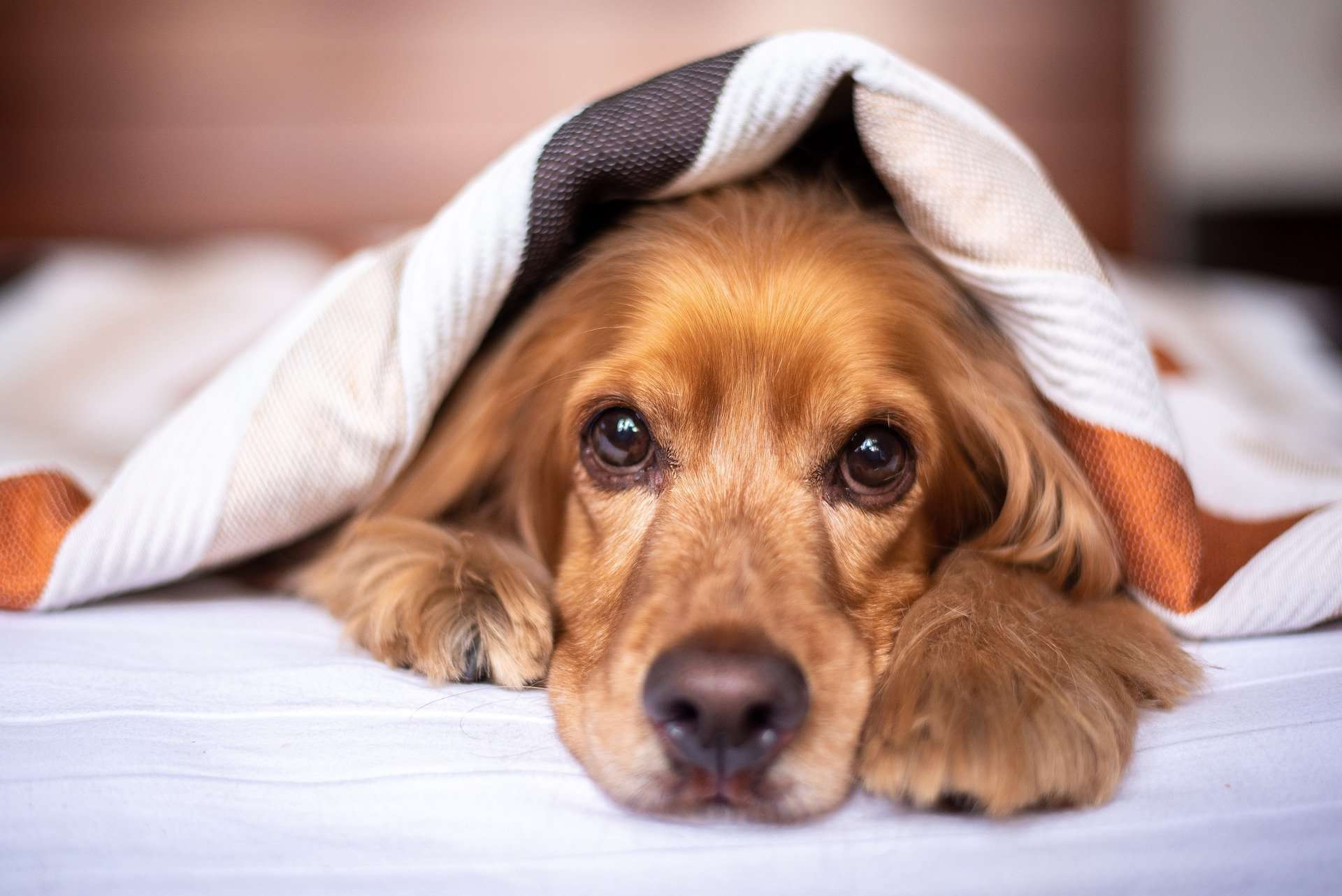 Bronchitis in Dogs – Symptoms, Treatment, Relief and More