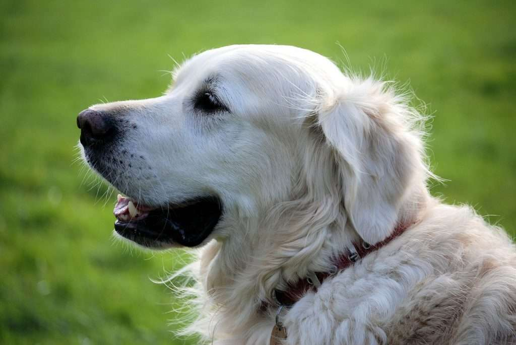 Causes of acute bronchitis in dogs