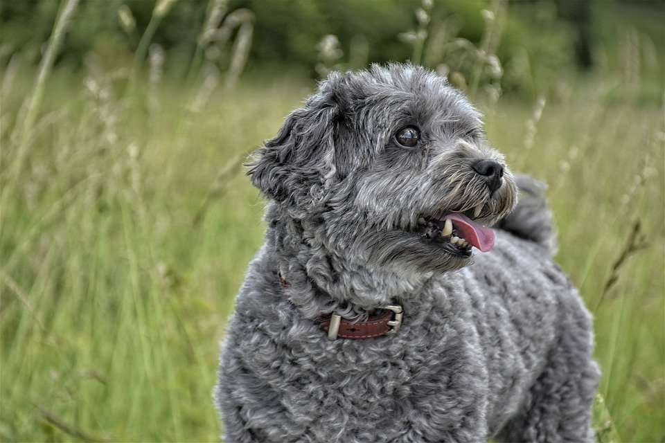 What causes allergic bronchitis dogs
