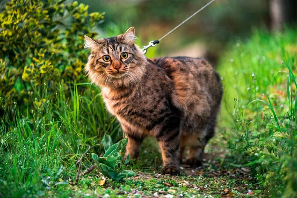 Cure for coronavirus in cats