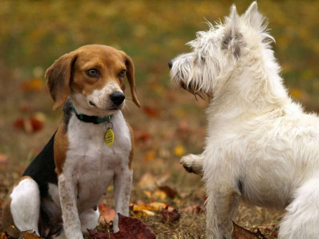 Prevention for Covid in Pets