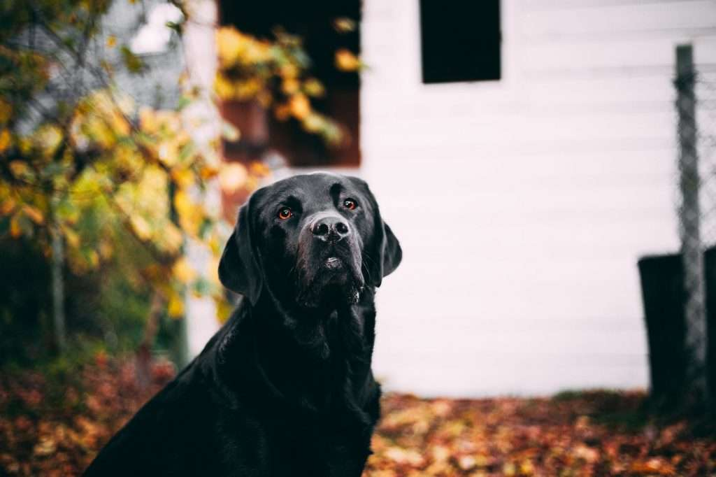 Treatment and Remedies for Covid in Dogs