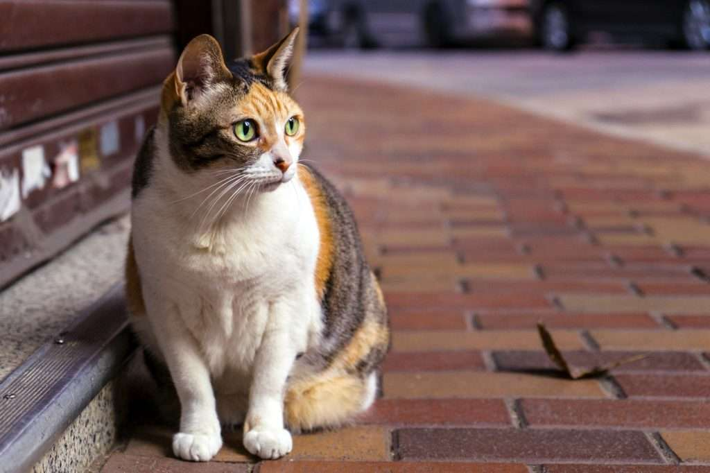 Pronosis for pneumonia in cats