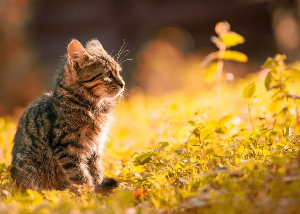 What causes pneumonia in cats