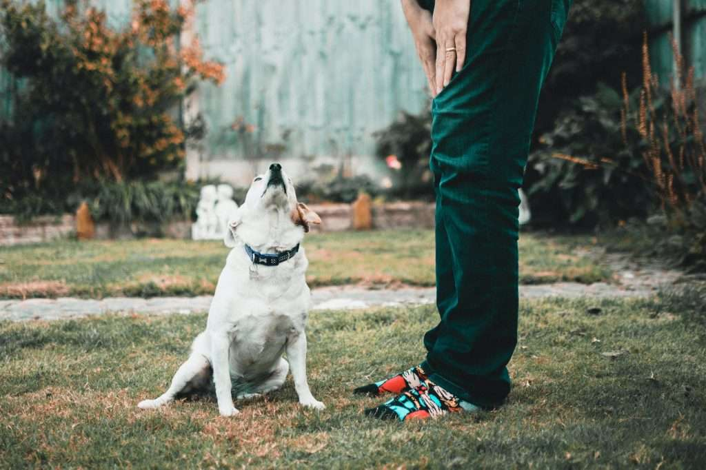 What is Canine Infectious Tracheobronchitis