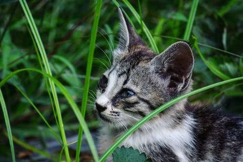 How do cats catch kennel cough?