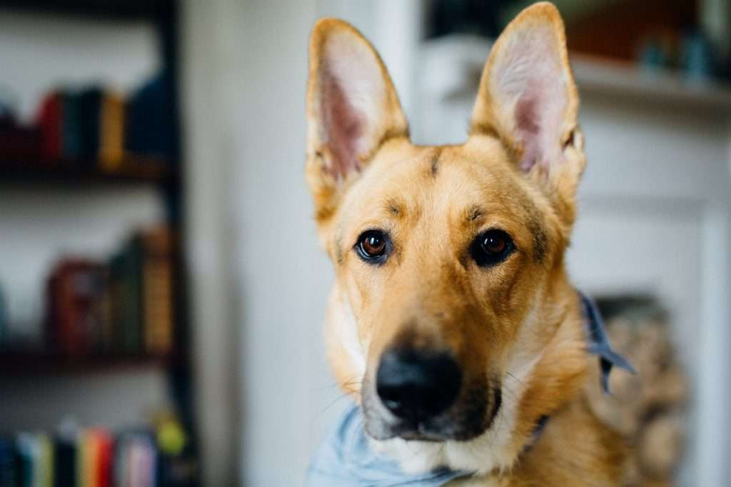 How does kennel cough spread?