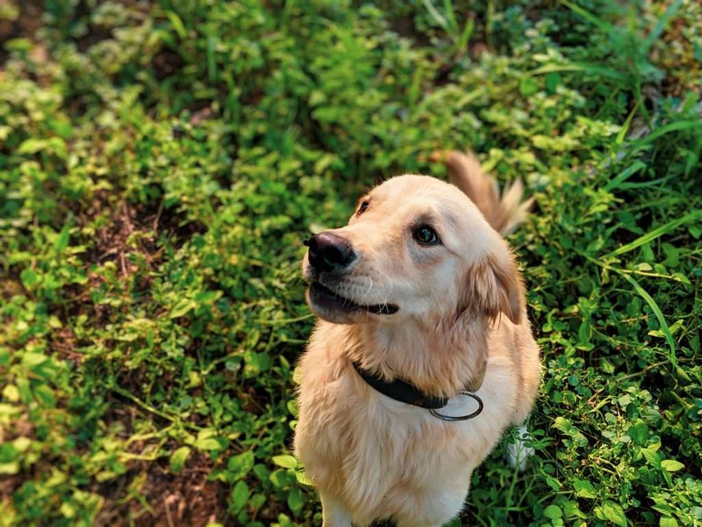 How to tell if dog has kennel cough